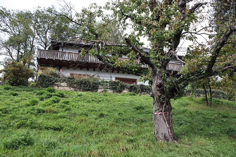 Abb. 1 Vernachlässigtes Gartendenkmal: Der Garten des Malers Otto Dix (1891-1969) am Bodensee vor seiner Restaurierung 2013