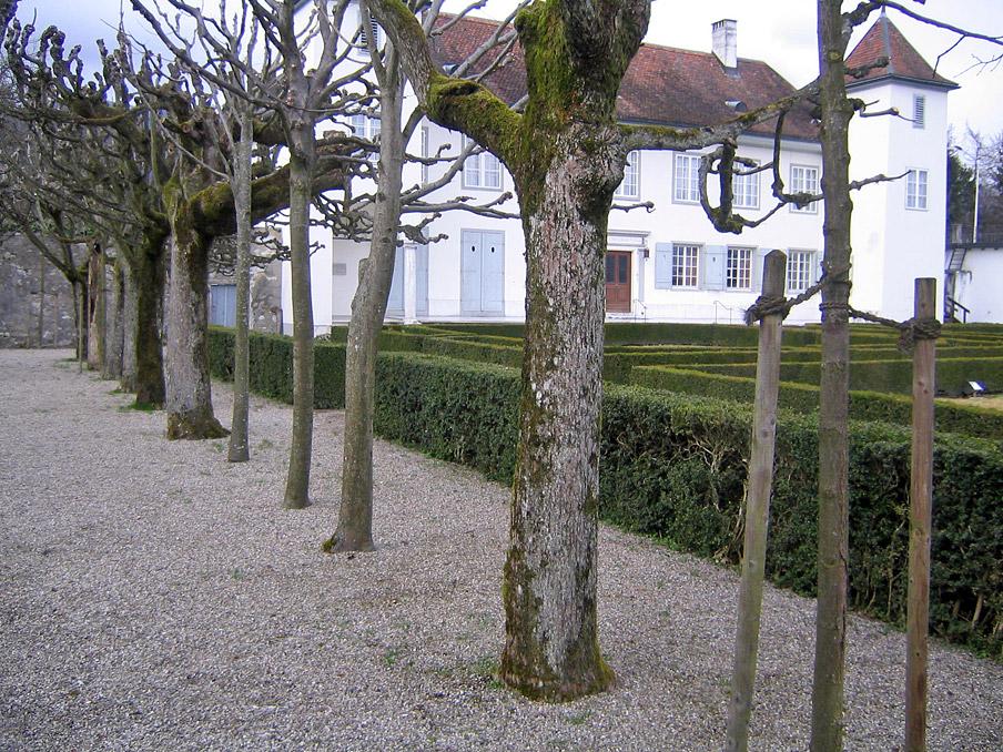 Abb. 4 Bäume als Kulturzeugen: Schnittspuren an alten Bäumen und des Sommersitzes de Vigier in Solothurn (Schweiz) und Ersatzpflanzungen