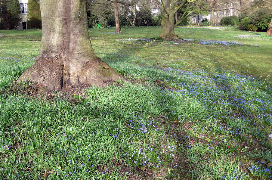 Abb. 5 Pflanzengesellschaften mit Geschichte: Parkwiese mit Frühjahrsblühern im Schlossgarten Mammern in der Schweiz